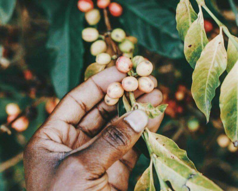 Eerlijk prijzen voor de hardwerkende koffieboeren